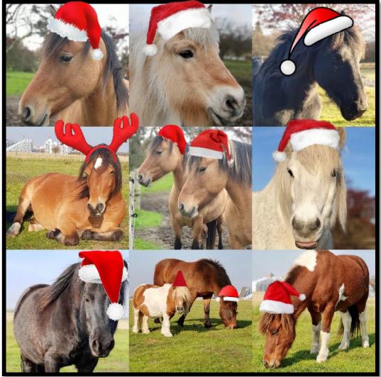 Jule-billede-Hestene